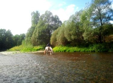 Montant un cavall molt golafre i assedegat