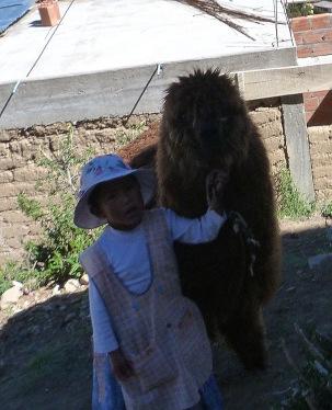 Per fi veiem una alpaca!