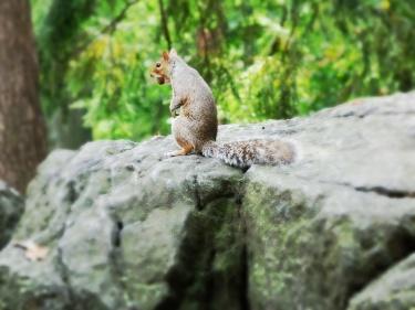 Esquirols arreu