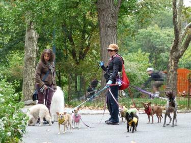 Passejadors de gossos al Central park