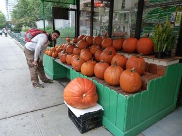 Tothom es prepara per Halloween
