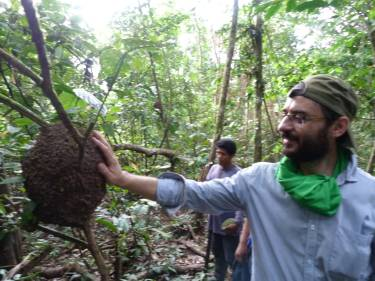Termites per evitar els mosquits