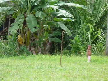 Al bellmig de la selva