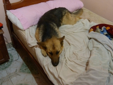 La Sasha invaïnt-nos el llit