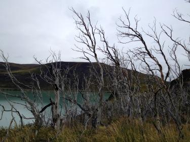Els arbres cremats els trobem arreu els dos primers dies