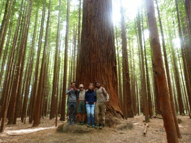 Al Redwood National Park