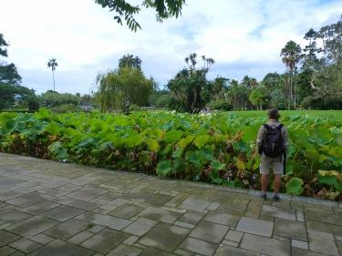 Jardins botànics