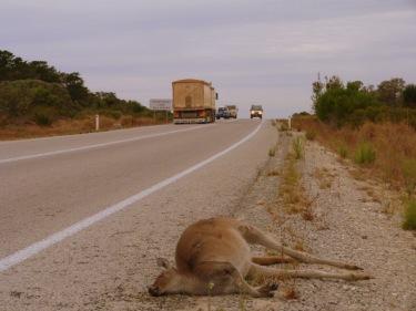 La gran desgràcia de les carreteres australianes