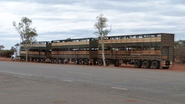 Desenes de vaques en un road train enmig d'una àrea de servei a l'Outback