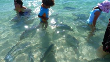 Ens visiten desenes de peixos enormes a Coral Bay!