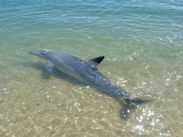 Els dofins saben perfectament a quina hora els hi caurà peixet per dinar
