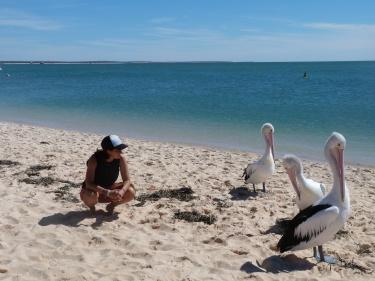 Mai hauríem pensat que els pelicans són tant grans!