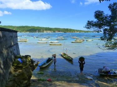 Recollint algues