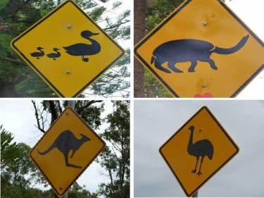 Està clar que a Austràlia hi ha molta vida salvatge