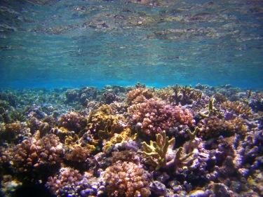 Una barrera de corall tota per a nosaltres sols