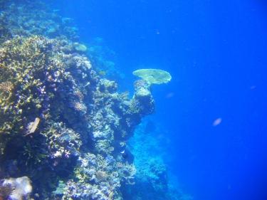 Més enllà de la barrera la immensitat del mar