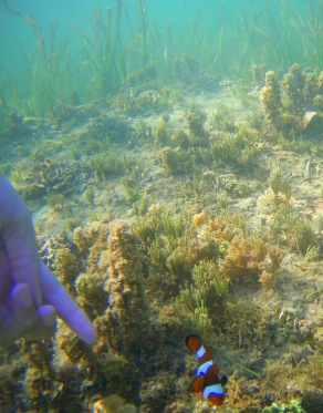 Jugant amb els Nemos