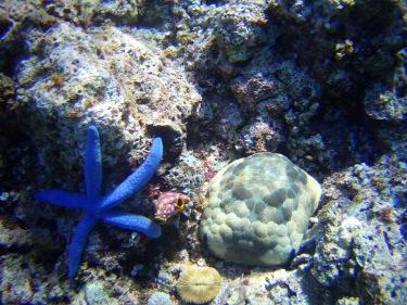 Diferents tipus d'estrelles de mar