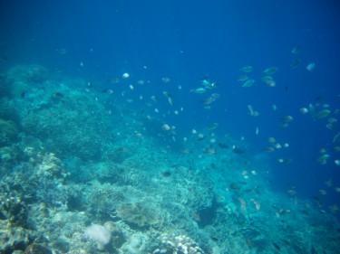 Centenars de peixos davant mateix de la platja