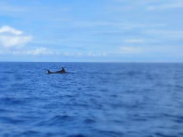 De camí a la barrera de corall veiem dofins!