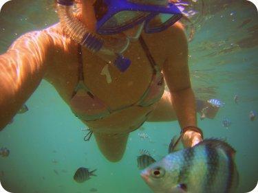 Al fish point