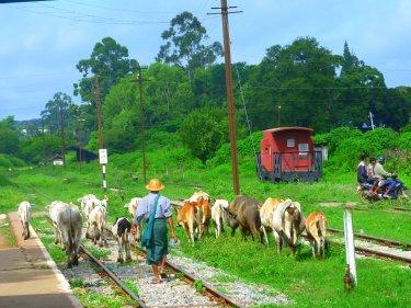 Malgrat que encara no hi passa cap tren a l'estació hi ha molt moviment